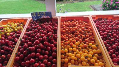 トマト販売中